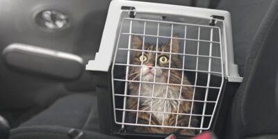 Trasporto gatto in auto